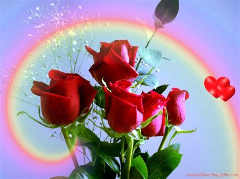 images of love roses red rose love wallpapers wallpaper cave