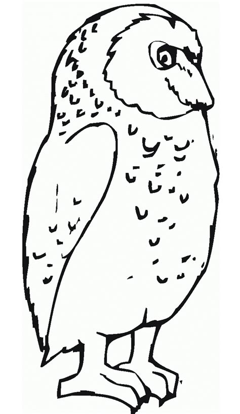 great sheets free printable owl coloring pages for