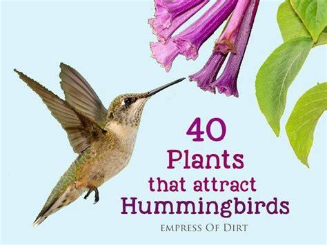 best 25 attracting hummingbirds ideas on pinterest