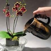 orchidea in vaso trasparente vasi per orchidee orchidee modelli di vasi per orchidee