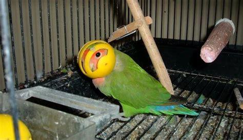Harga Pakan Burung Fit 5 cara mengatasi burung yang sering mengacak acak pakan