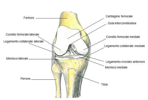 dolore al lato interno ginocchio gruppi muscolari facciamo un po di chiarezza youcoach