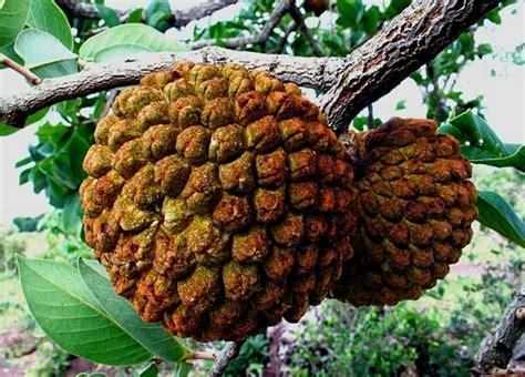 piante invernali da vaso piante invernali da esterno piante da giardino fiori