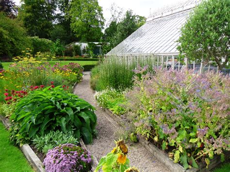 backyard herbs herb garden in farmleigh house walled garden tim austen garden designs