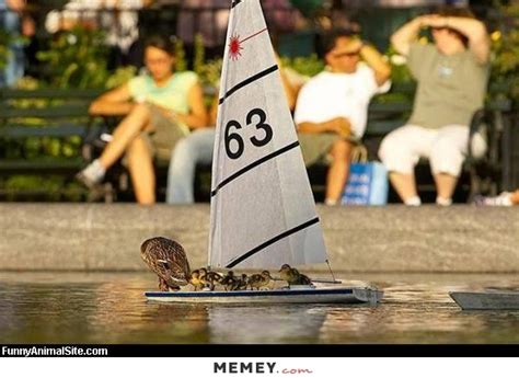 toy boat lyrics duck memes funny duck pictures memey