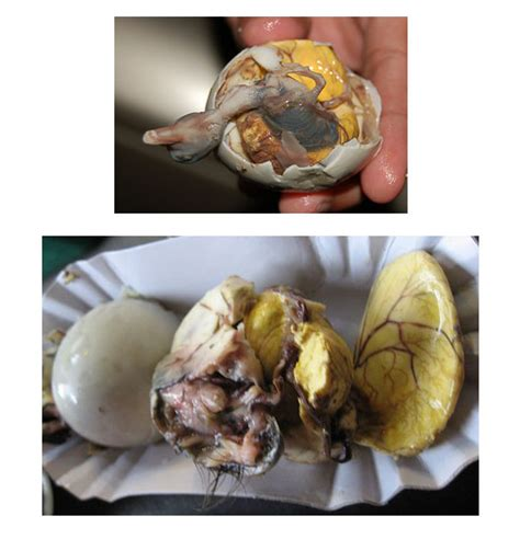 the worlds 3 most disgusting egg dishes oddity central the 10 most disgusting foods in the world gross