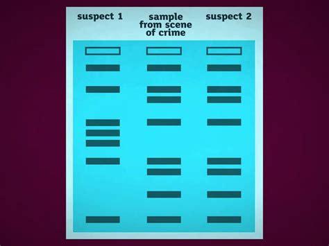 dna fingerprinting lab report sle csi dna fingerprinting