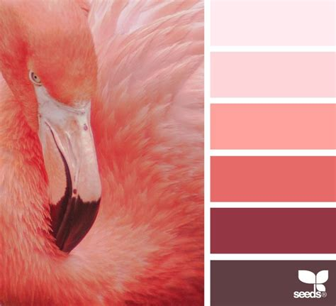 what color is a flamingo 17 best ideas about flamingo color on