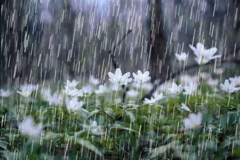 imagenes mamonas de lluvia 191 sab 237 as que el mar es salado por el efecto de la lluvia