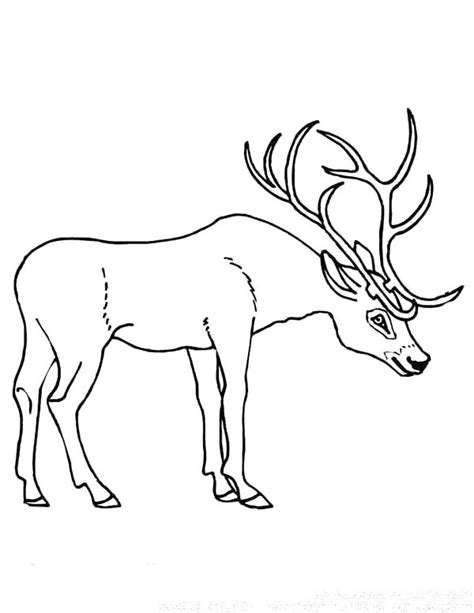 coloring pages of deer antlers stag antlers coloring pages