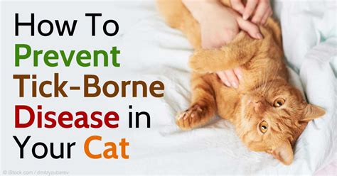 how to stop a cat from on the rug 5 tick borne diseases that occur in cats