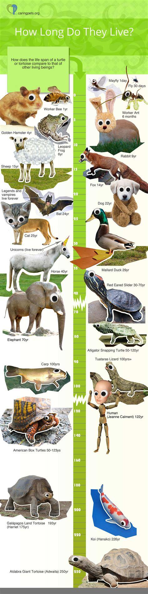 turtle lifespan    care   turtle
