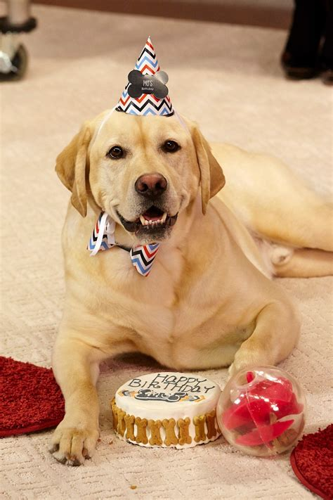 dogs birthday birthday pupstyle