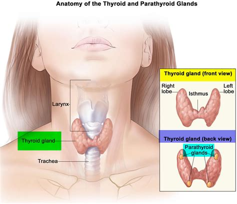 Foxx Has Surgery For Gland Problem by Thyroid Gland Location Function Hormones Problems And