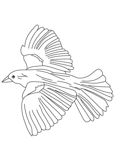 coloring pages of birds flying flying blackbird coloring page coloring 3 pinterest