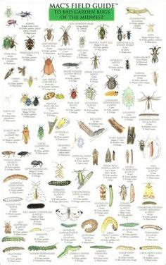 backyard bugs 101 flashcards for discovering insects books the wizard of oz on wizard of oz margaret