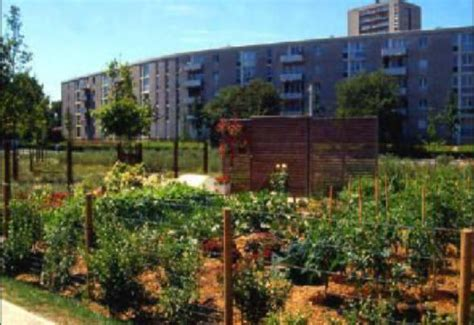 orto sul terrazzo di casa coltivare l orto sul terrazzo di casa wakeupnews