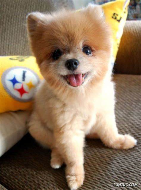 funzug com my new cute little puppy