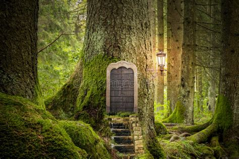 the light in the forest audiobook monde imaginaire magique image stock image du f 233 e trappe