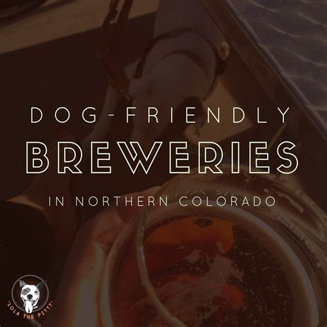 friendly breweries friendly northern colorado breweries lola the pitty