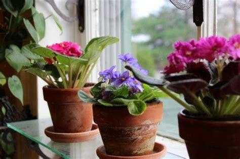 top  flowering plants   easy   utoptens