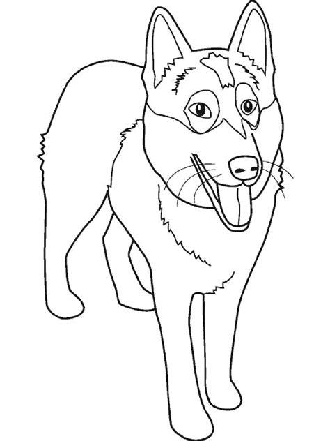 imagenes de animales carnivoros para colorear dibujos para colorear animales carnivoros imagui