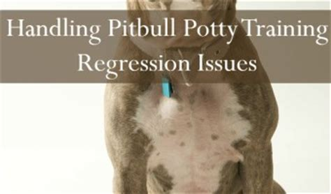 puppy potty regression today on pitbull puppy tips we ll be going potty regression