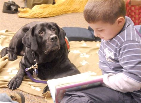 reading to dogs reading to dogs all pet news