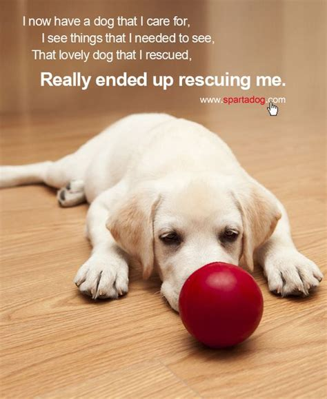 rescue me dogs the world s catalog of ideas