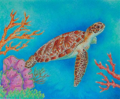 what color is a turtle jodi s journey and this is my and