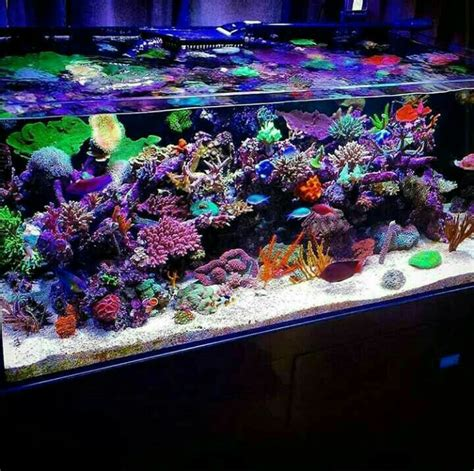 marine aquascaping techniques 1000 images about aquascaping on pinterest saltwater