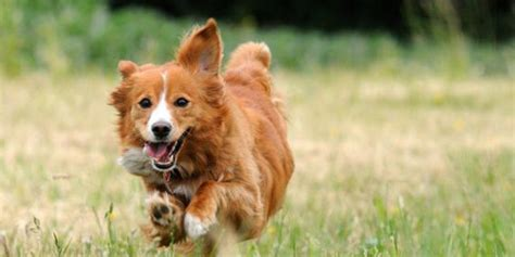 What Large Dogs Shed The Least by Small Dogs That Don T Shed Page 2 Breeds