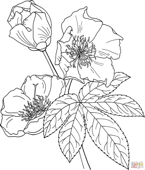 coloring pages of magnolia flowers magnolia tree coloring pages