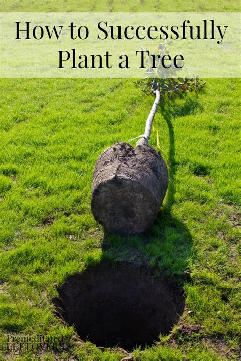 how to successfully plant a tree