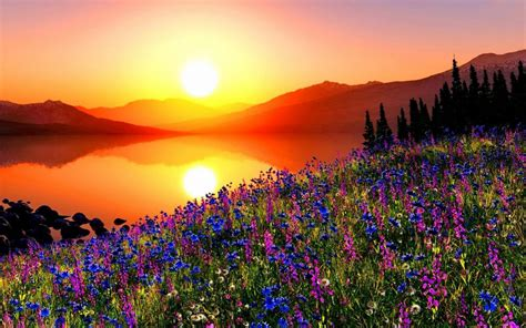mountain flowers  sunset hd wallpaper background image