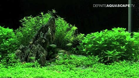 aquascape plants list aquascaping planted aquarium 60x30x36 youtube