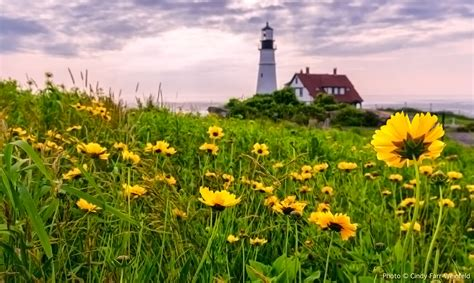 pics of spring the lighthouse portland head light and fort williams park