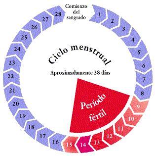 Calendario Fertil Menstruaci 243 N Y El Ciclo Menstrual Educaci 243 N Salud Y Vida