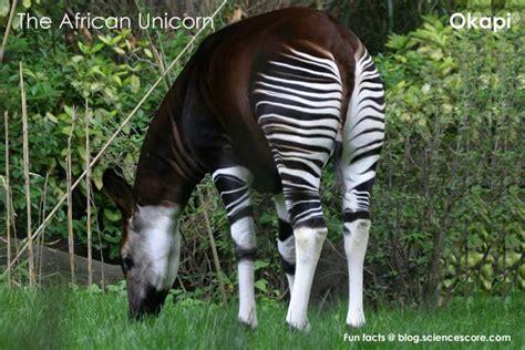 do unicorns really exist