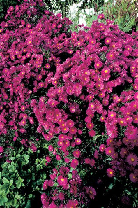 ste giapponesi fiori giardini