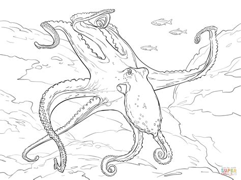Sketches Of Dagli by Common Octopus Coloring Page Free Printable Coloring Pages