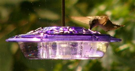 how long should i feed the hummingbirds the zen birdfeeder