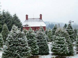 red barn tree farm orting wa christmas pinterest