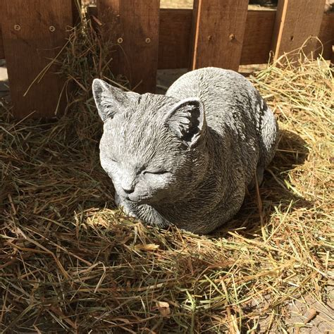 fensterbrett katze kleine katze ein tr 228 umendes k 228 tzchen als fensterbank