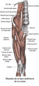 cuisse wikip 233 dia