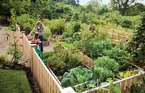 creating a raised bed vegetable garden the benefits of raised bed gardening house