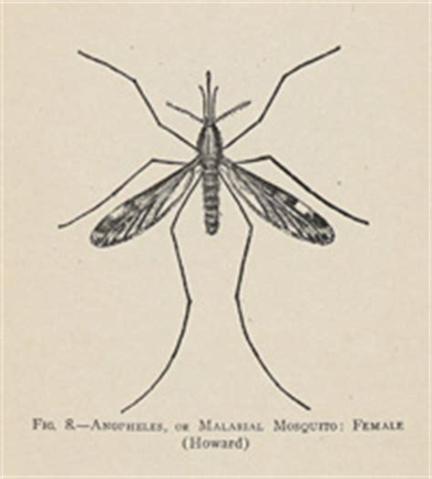 mosquito in panama the eradication of malaria and yellow fever in cuba and panama classic reprint books panama canal s mosquitos thinglink