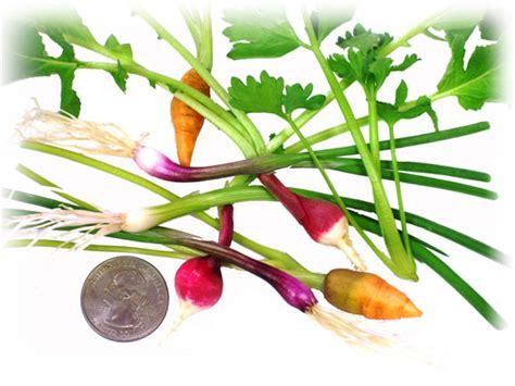 fresh tiny specialty produce fresh origins