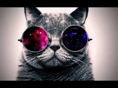 wallpaper hd chat lunette butiful cat mian fiyaz youtube