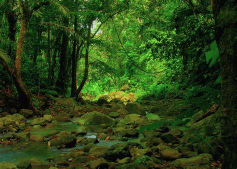 la selva tropical m 233 xico la selva forest wald m 233 xico selva